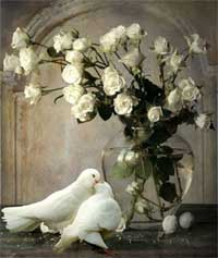 white doves and roses